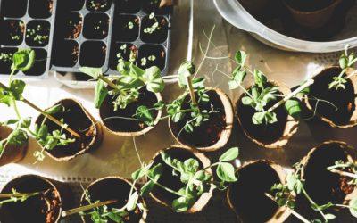 L'OctoPousse, un jardin d'intérieur pour le futur